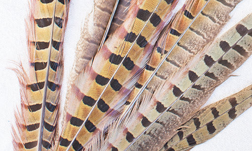 Real Pheasant Feather 12 pack