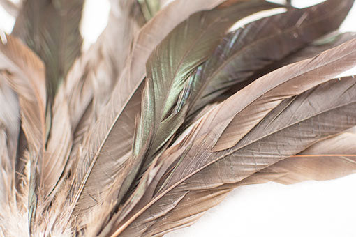 Real Coque Rooster Feather Pick