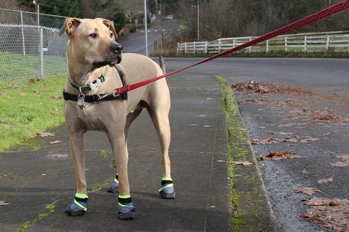 Booties for Dogs: Protecting Your Pup's Paws Against Dragging