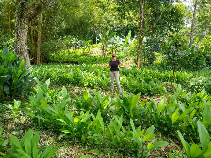 Healers PetCare, Biolley Farms Join Forces to Save the Rainforest