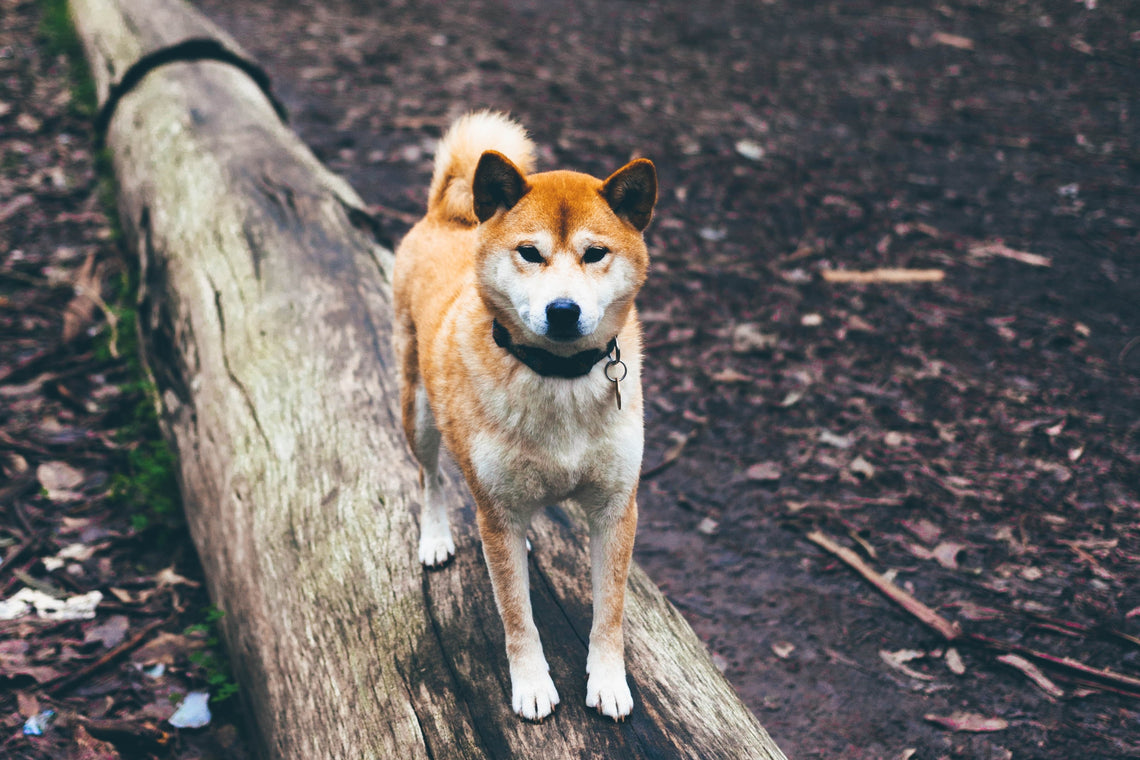 How to Hike with Your Dog This Spring (and Always)