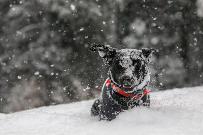 How to Keep Dogs Safe and Healthy During the Holidays