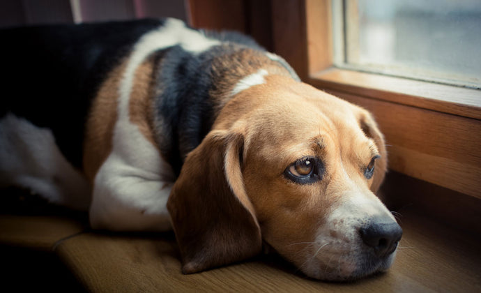 What Causes Pups' Anxiety (and How to Mitigate It)
