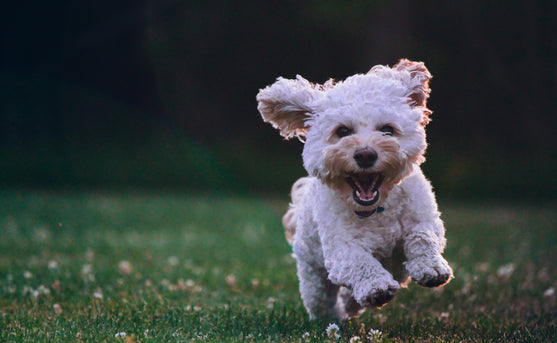 How to Ensure Your Dog Gets Enough Exercise (Even When the Weather Won't Cooperate)