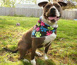 Spot-Lite LED Lighted Bandanas