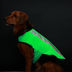 Spot-Lite LED Lighted Jackets - Large Dogs