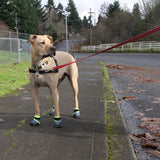 Urban Walkers Dog Booties