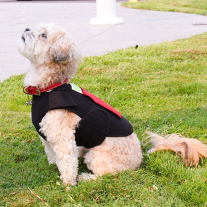 Image of a dog sitting to the side, wearing a Healers Therapeutic & Anxiety Front Body Wrap.