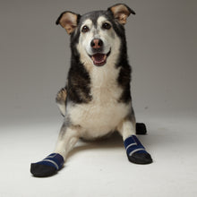 Image of a dog wearing Healer's Medical Booties, laying down.
