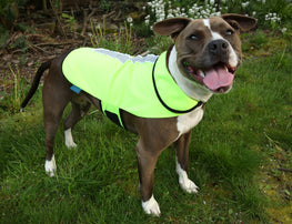 Spot-Lite LED Lighted Jacket - Small/Medium Dog - Neon Green