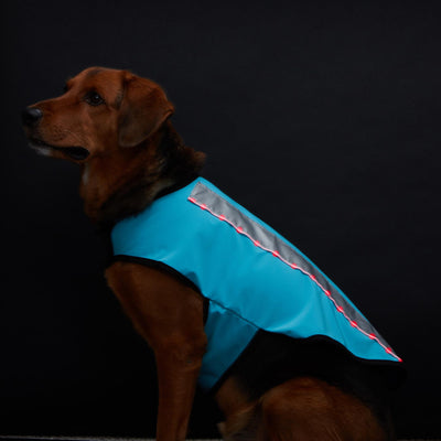 Spot-Lite LED Lighted Jacket - Large Dog - Teal