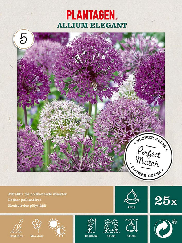 Allium Elegant - Perfect Match #17