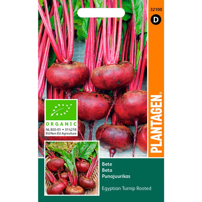 Bete 'Egyptian Turnip Rooted' - organic
