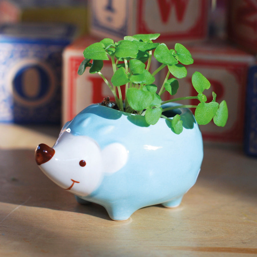 Hedgie Green Mini Planter - hipkits.com