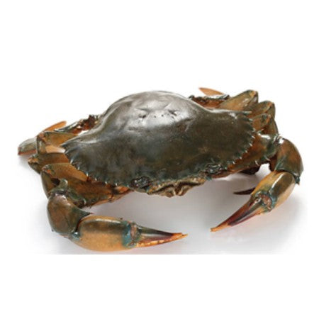 Live Mud Crab - Indonesia