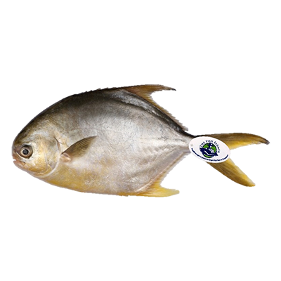 Sea Farmed Golden Pomfret