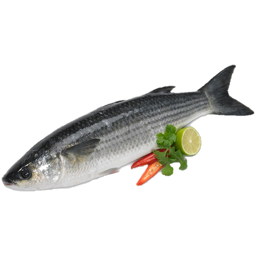 Sea Farmed Grey Mullet