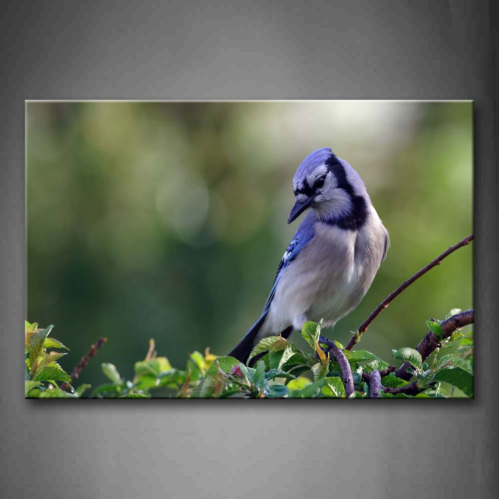 Bird Stand On Branch Wall Art Painting The Picture Print On Canvas Animal Pictures For Home Decor Decoration Gift