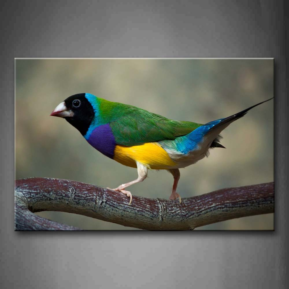 A Colorful Bird Stand On Branch Wall Art Painting Pictures Print On Canvas Animal The Picture For Home Modern Decoration