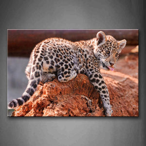 Baby Jaguar Bend Over On Rock Wall Art Painting The Picture Print On Canvas Animal Pictures For Home Decor Decoration Gift
