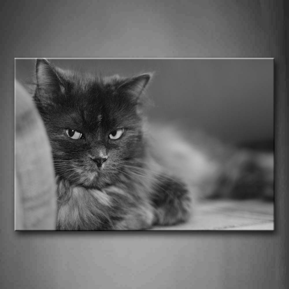 Black And White Black Cat Stare Front  Wall Art Painting Pictures Print On Canvas Animal The Picture For Home Modern Decoration