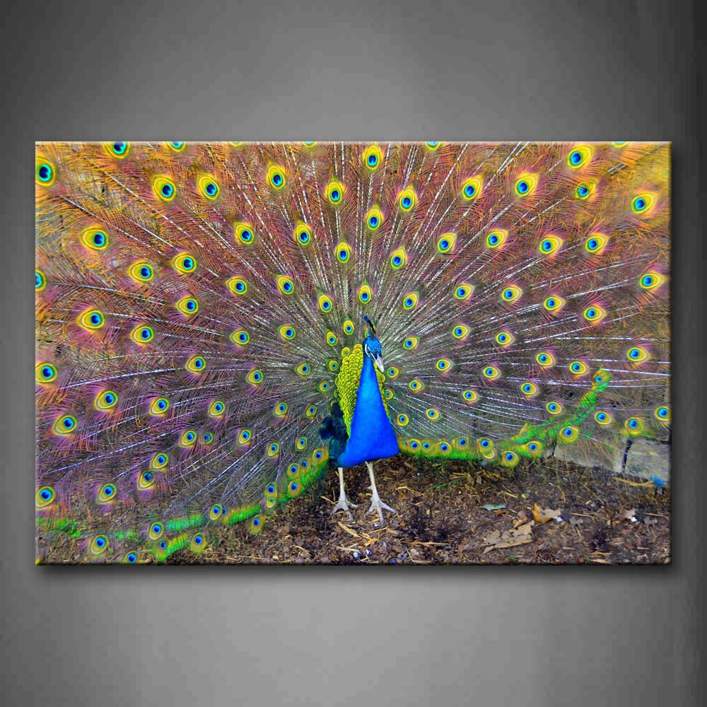 Beautiful Peacock And Open Wing Wall Art Painting Pictures Print On Canvas Animal The Picture For Home Modern Decoration
