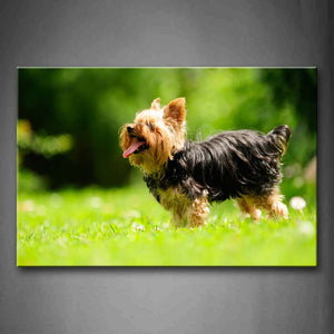 Black And Yellow Silky Terrier Stand On Grass Wall Art Painting Pictures Print On Canvas Animal The Picture For Home Modern Decoration