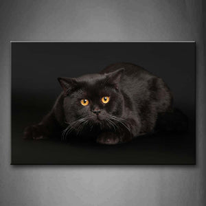 Black Cat Sit In Black Background Wall Art Painting Pictures Print On Canvas Animal The Picture For Home Modern Decoration