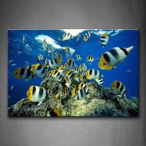 Beautiful Fishes Near Sea Surface Rock Wall Art Painting Pictures Print On Canvas Animal The Picture For Home Modern Decoration