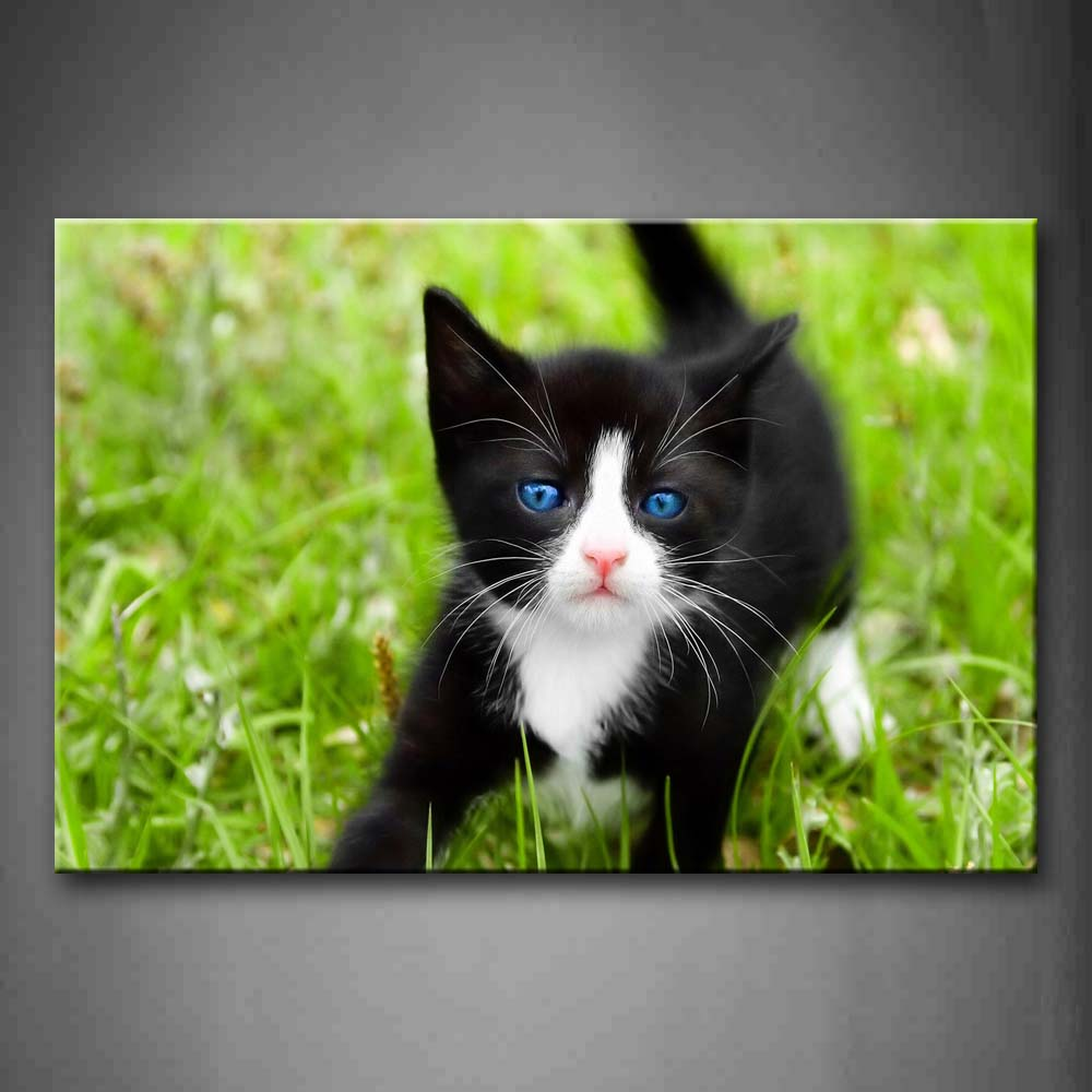 Black And White Cat Play In Grass Wall Art Painting The Picture Print On Canvas Animal Pictures For Home Decor Decoration Gift