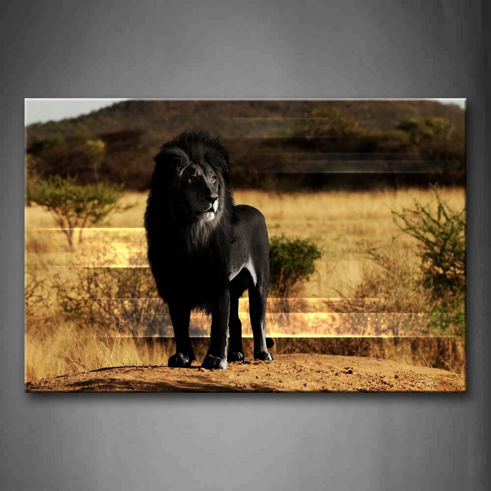 Black Lion Stand On Mud Land Hill Grass Tree Wall Art Painting Pictures Print On Canvas Animal The Picture For Home Modern Decoration