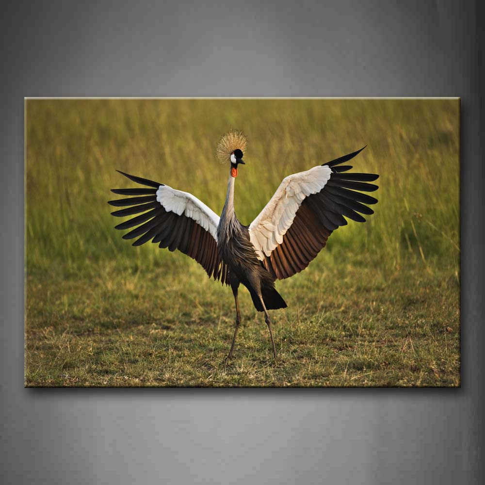 Beautiful Crane Open Feather On Grassland  Wall Art Painting Pictures Print On Canvas Animal The Picture For Home Modern Decoration