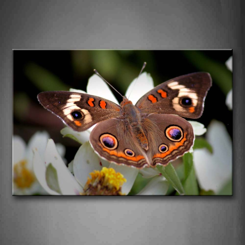 Beautiful Butterfly Stand On White Flowers Wall Art Painting The Picture Print On Canvas Animal Pictures For Home Decor Decoration Gift