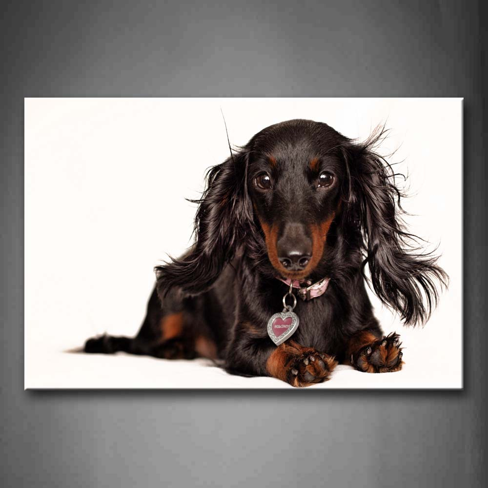 Black Dachshund Sit On Floor  Wall Art Painting Pictures Print On Canvas Animal The Picture For Home Modern Decoration