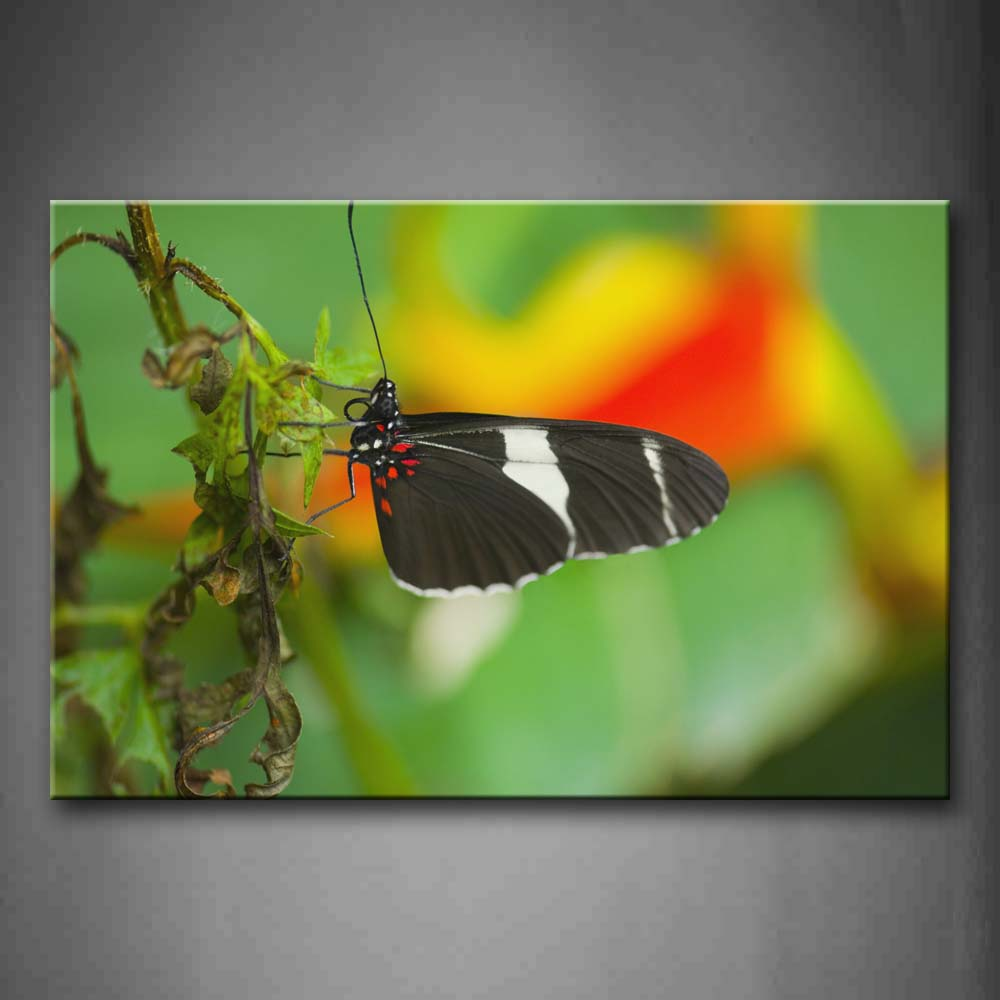 Black Butterfly Stay On Leaves Wall Art Painting The Picture Print On Canvas Animal Pictures For Home Decor Decoration Gift