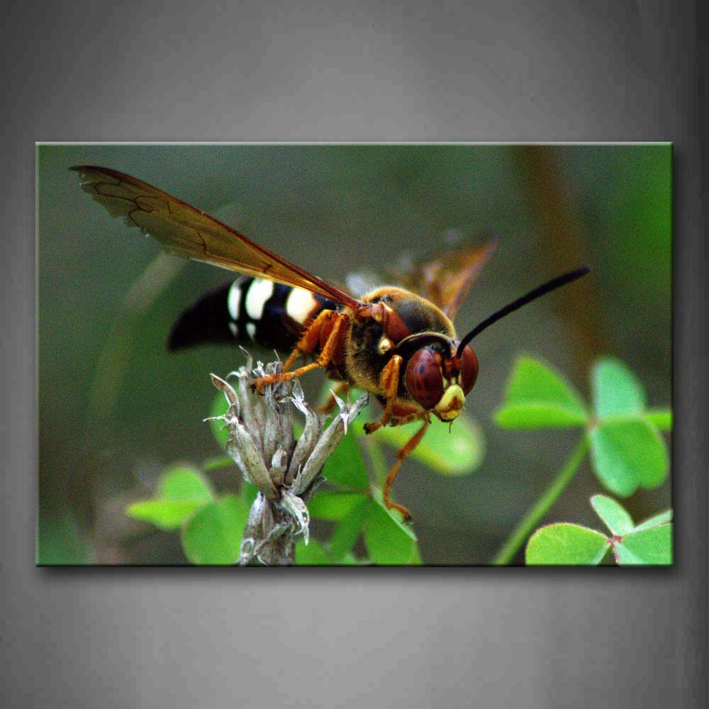 Big Wasp Stay On Leaf  Wall Art Painting The Picture Print On Canvas Animal Pictures For Home Decor Decoration Gift