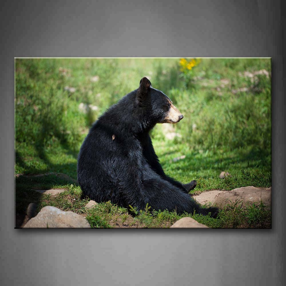 Black Bear Sit On Lawn Near Stones Wall Art Painting Pictures Print On Canvas Animal The Picture For Home Modern Decoration