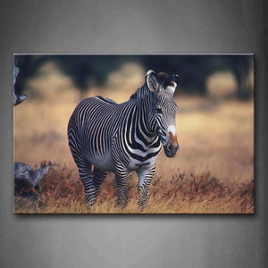 Zebra Stand On Lawn  Wall Art Painting The Picture Print On Canvas Animal Pictures For Home Decor Decoration Gift
