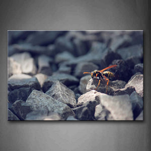 Bee Crawl On Stones Wall Art Painting Pictures Print On Canvas Animal The Picture For Home Modern Decoration