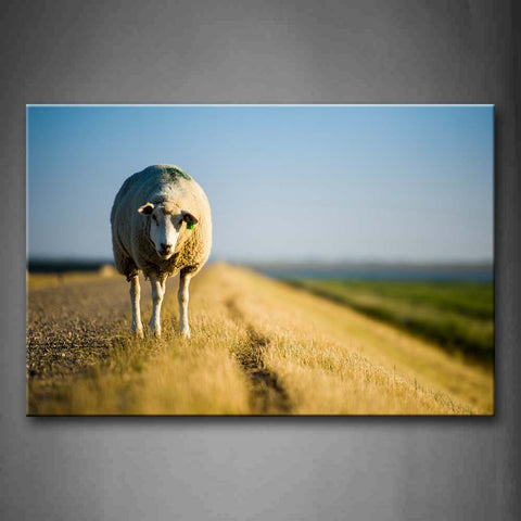 A Sheep Standing In Grass Field Wall Art Painting Pictures Print On Canvas Animal The Picture For Home Modern Decoration