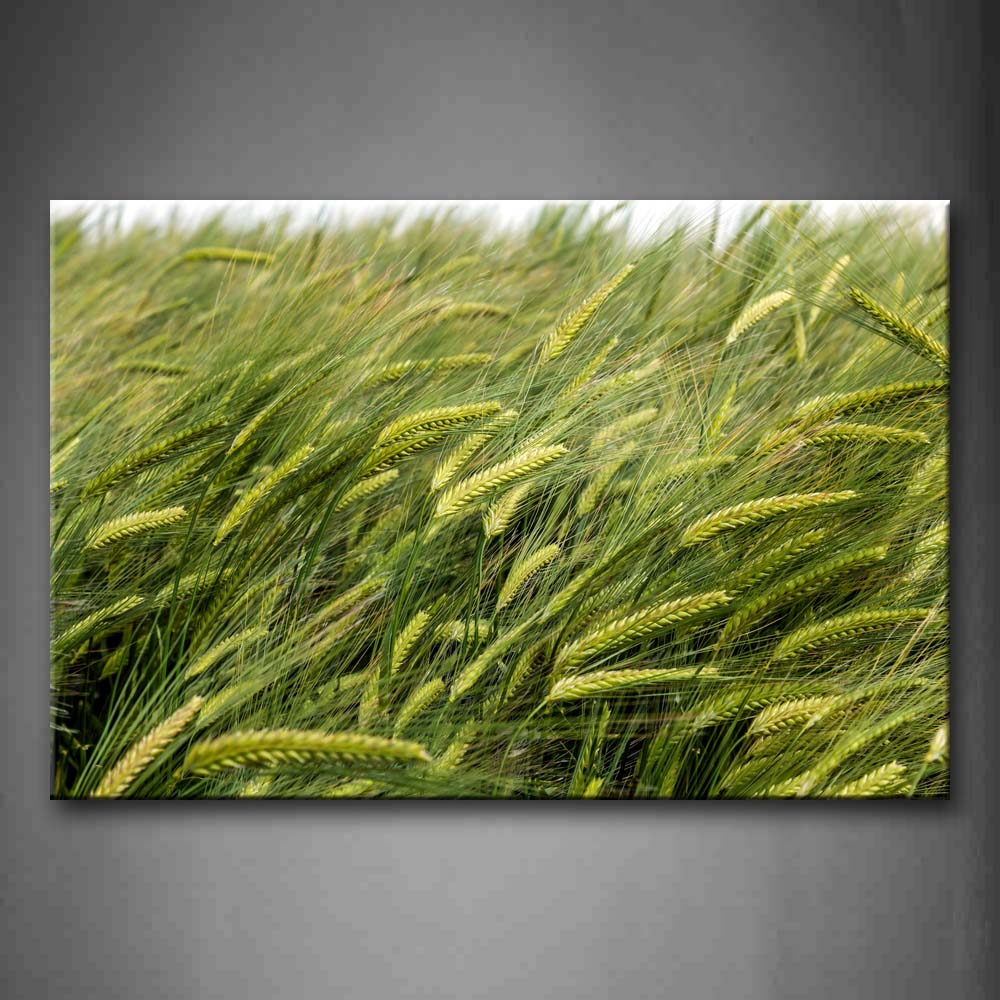 A Group Of Green Wheats Wall Art Painting The Picture Print On Canvas Botanical Pictures For Home Decor Decoration Gift