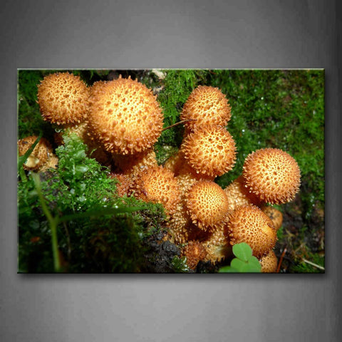 Yellow Mushrooms Grow Near Moss Wall Art Painting The Picture Print On Canvas Botanical Pictures For Home Decor Decoration Gift