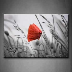 Beautiful Poppy In Bright Red In The Lawn Wall Art Painting The Picture Print On Canvas Flower Pictures For Home Decor Decoration Gift
