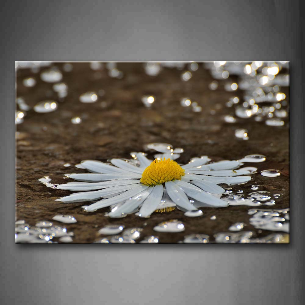 Big Daisy On The Ground With Many Waterdrops Wall Art Painting The Picture Print On Canvas Flower Pictures For Home Decor Decoration Gift