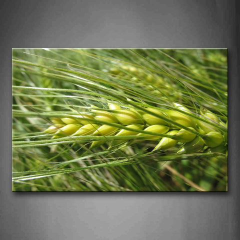 Yellow Wheat With Green Grass Wall Art Painting Pictures Print On Canvas Botanical The Picture For Home Modern Decoration