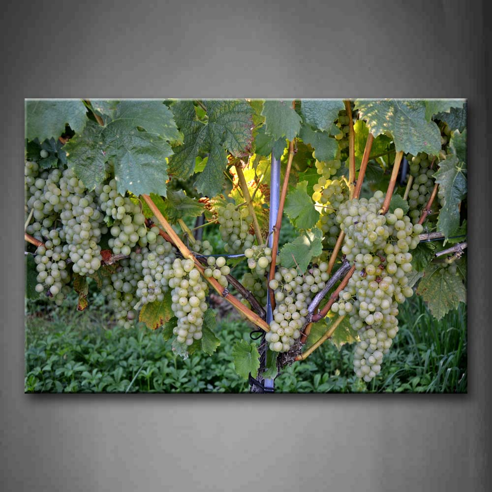 A Amount Of Green Grapes. Wall Art Painting Pictures Print On Canvas Food The Picture For Home Modern Decoration