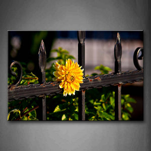 Yellow Flower On The Iron Of Fence  Wall Art Painting The Picture Print On Canvas City Pictures For Home Decor Decoration Gift