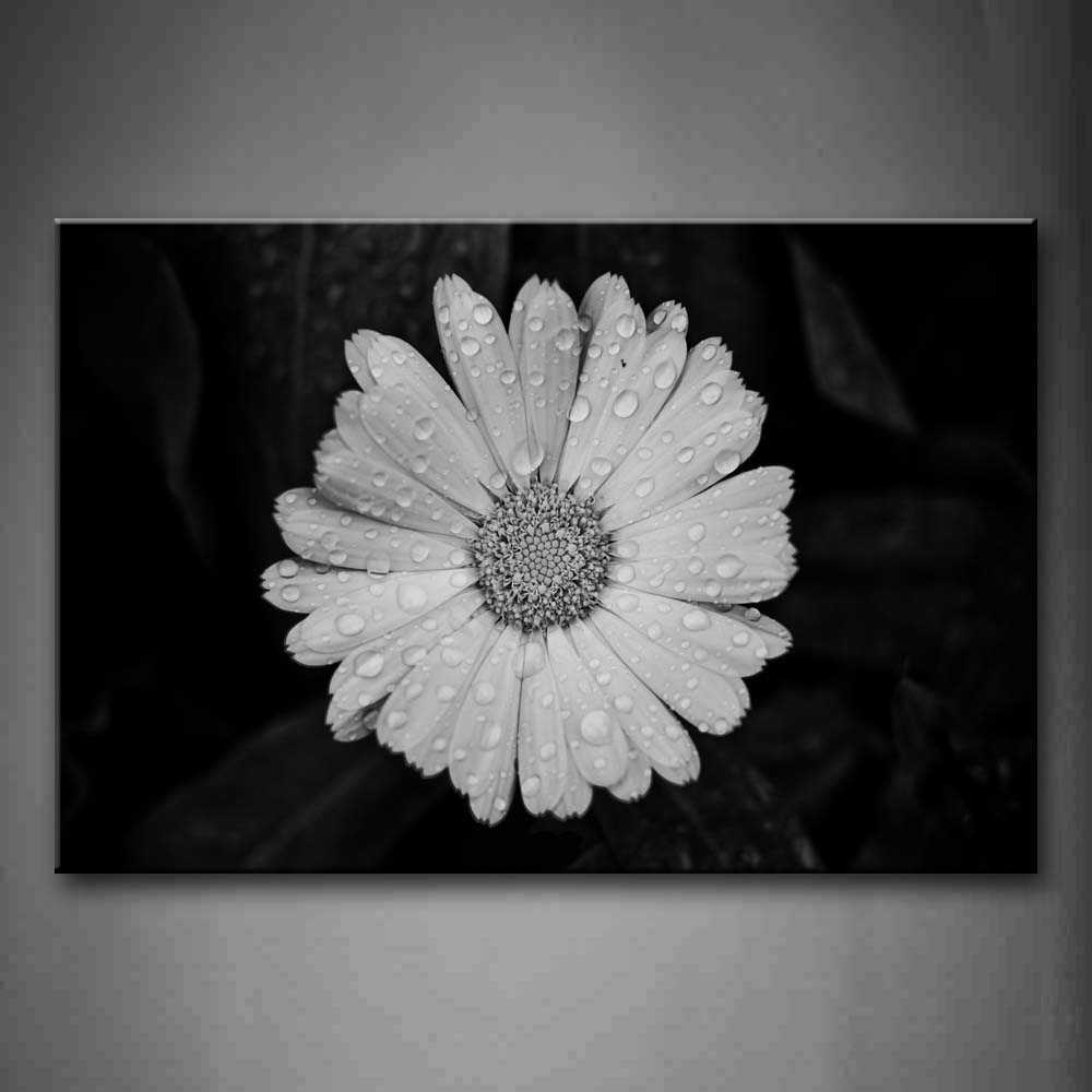 Black And White White Flower With Dewdrop Wall Art Painting Pictures Print On Canvas Flower The Picture For Home Modern Decoration