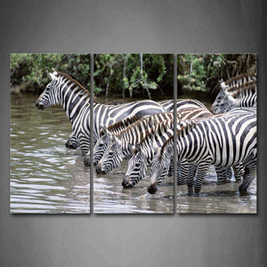 Zebras Stand In River And Drinking Water Wall Art Painting Pictures Print On Canvas Animal The Picture For Home Modern Decoration