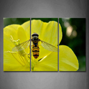 Bee Is Gather Honey In Yellow Flower Wall Art Painting Pictures Print On Canvas Animal The Picture For Home Modern Decoration